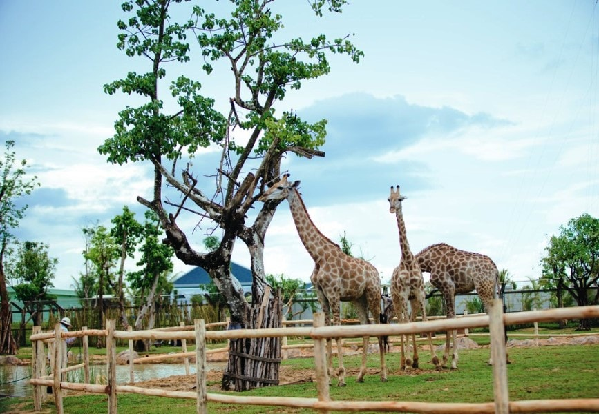 Hoi An to Vinpearl Land By Private Car- Hoi An Private Taxi